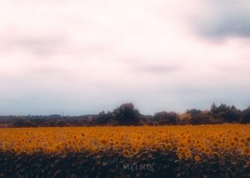 FRANCE_2011_5