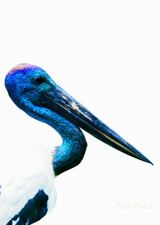 BIRD_MELNIK_AUSTRALIAsmalllogo