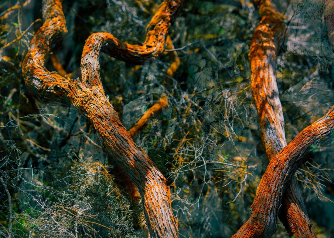 Melnik_treesstones_3
